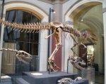 Bewertung: Museum für Naturkunde Berlin