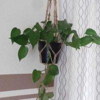 Test: Abseed 4er Set Pflanzen Makramee Aufhänger Jute 4 Bein Blumenampel innen Außen Hängeampel Hängender