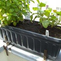 test blumenkasten 60 cm in anthrazit mit wasserspeicher und wasserstandsanzeiger. Black Bedroom Furniture Sets. Home Design Ideas